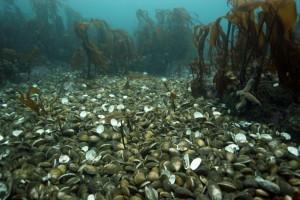 Shells after a big storm.